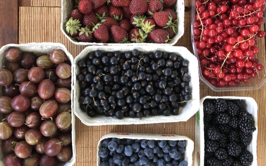 Was können Beerenfrüchte für ein Beitrag für unser Wohlbefinden sein